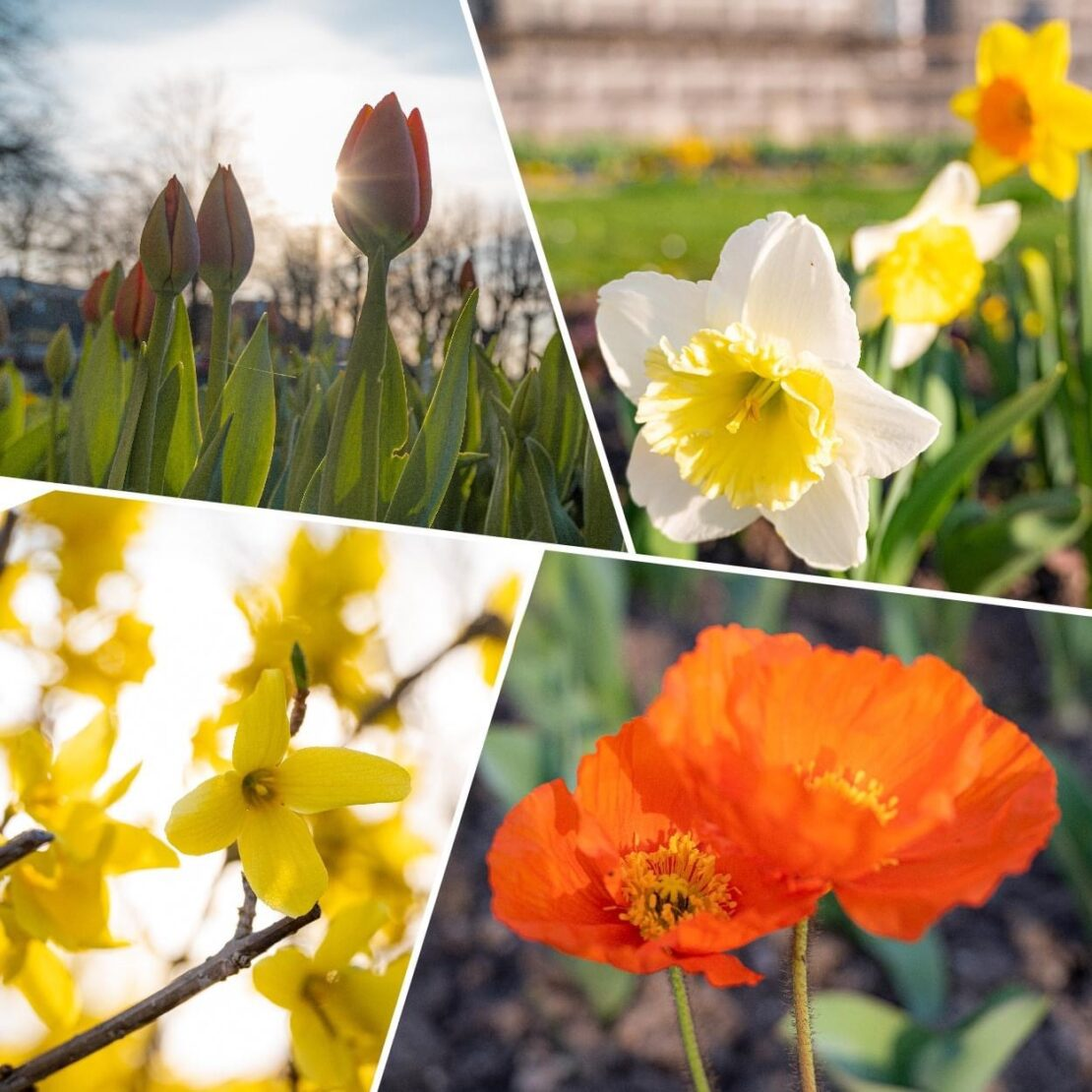 Blumen aus Wels