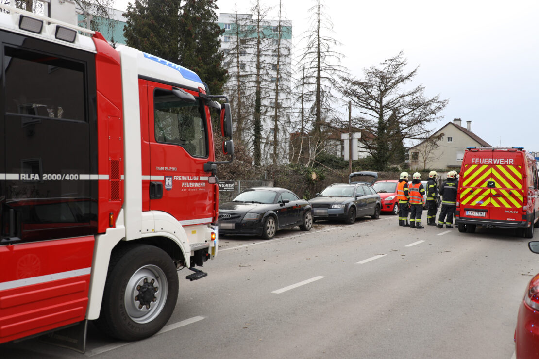 Feuerwehreinsatz: Baum in Wels-Vogelweide auf parkendes Auto gestürzt