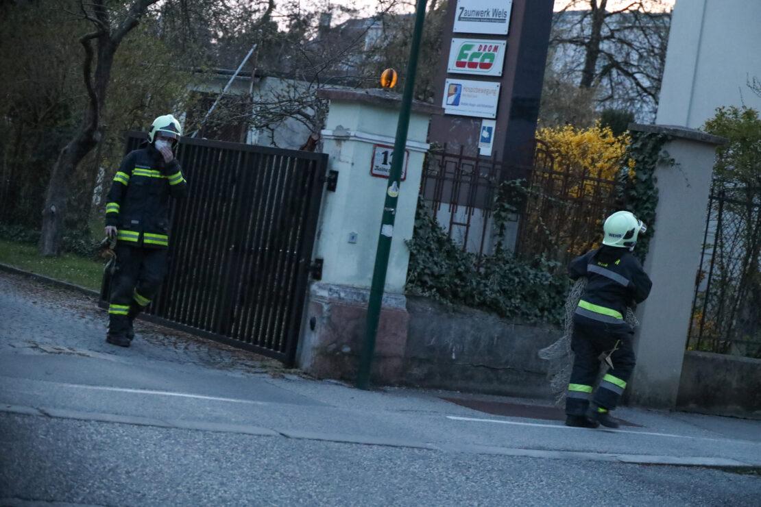 Rehe im innerstädtischen Bereich beschäftigen Einsatzkräfte in Wels-Innenstadt