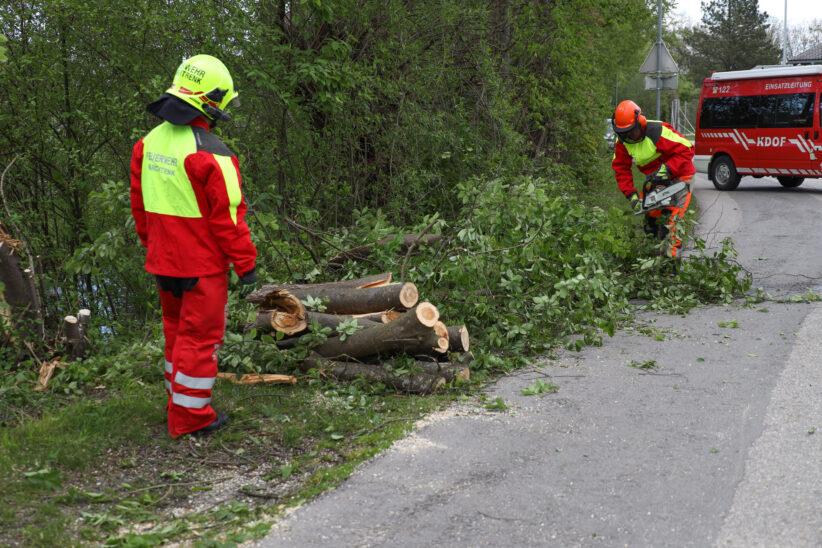 Feuerwehr bei umgestürzten Baum in Marchtrenk im Einsatz