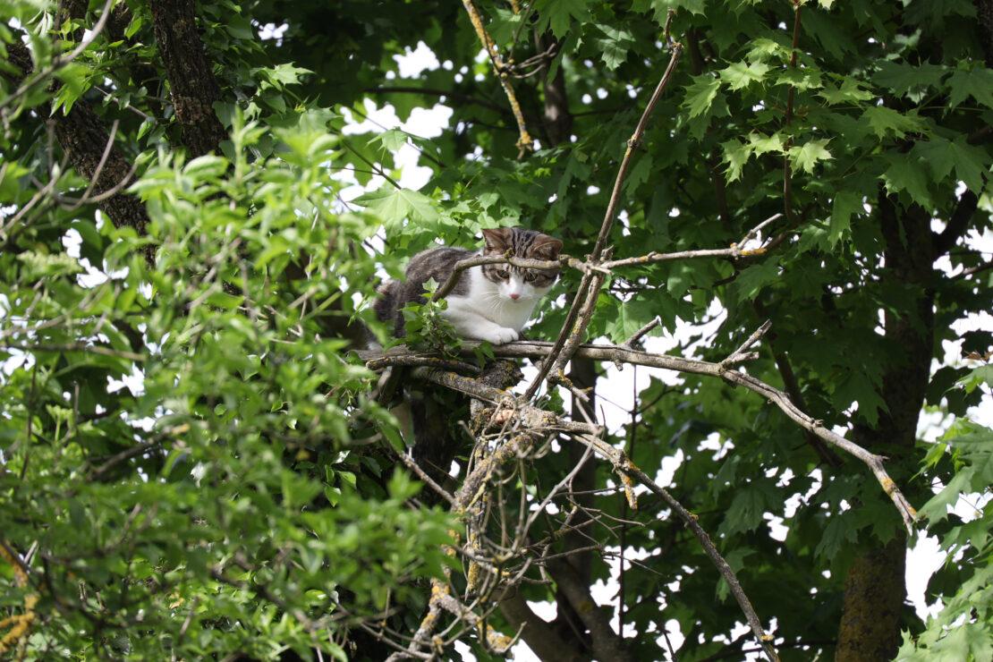 Einsatz wegen einer Katze auf einem Baum in Wels-Vogelweide