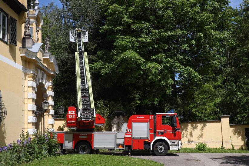 Katze in Wels-Puchberg wollte sich von Einsatzkräften nicht vom Baum retten lassen