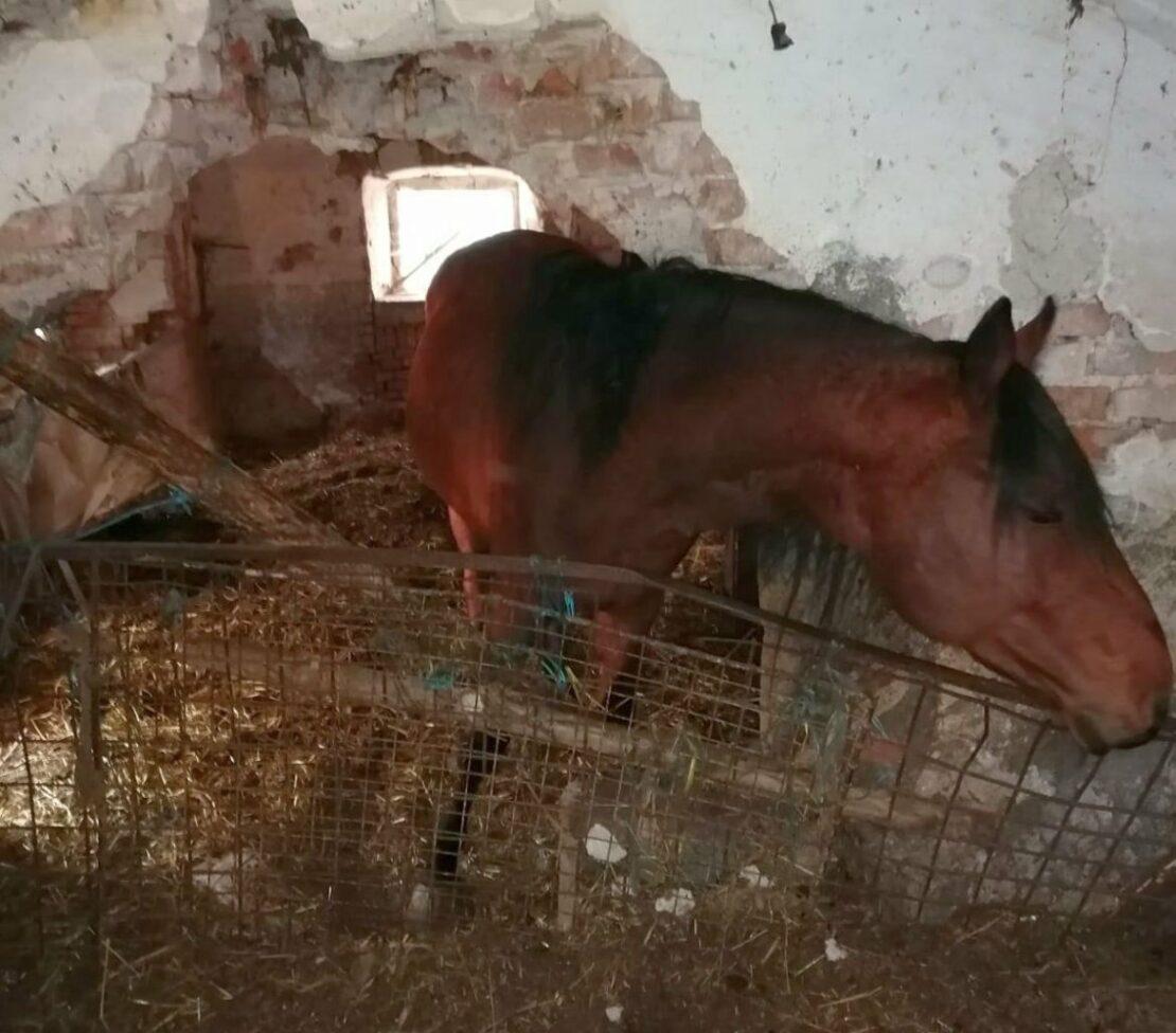 Horrorhof in der Fernreith - Tierrettung muss eingreifen