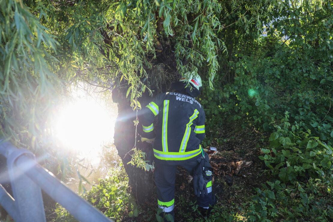Brand eines hohlen Baumstammes in Wels-Neustadt