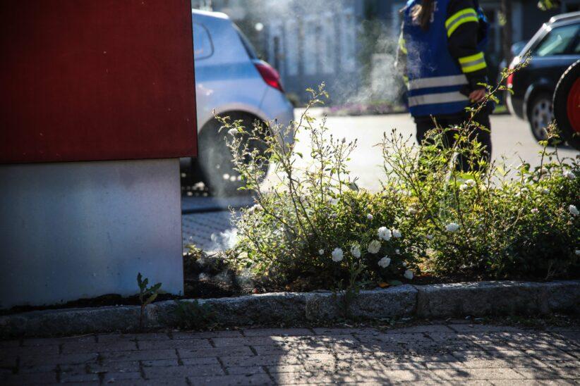 Kleinbrand auf den zweiten Blick - Glosendes Blumenbeet in Marchtrenk rasch gelöscht