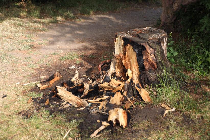 Brand eines Baumstumpfes vor einer Volksschule in Wels-Vogelweide
