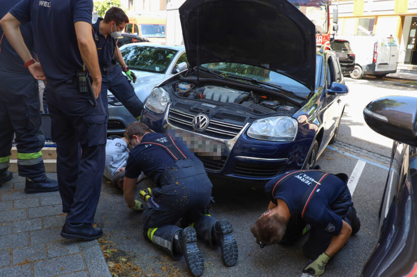 Kleines Kätzchen in Wels-Innenstadt gleich zweimal durch Feuerwehr aus PKW-Motorräumen gerettet