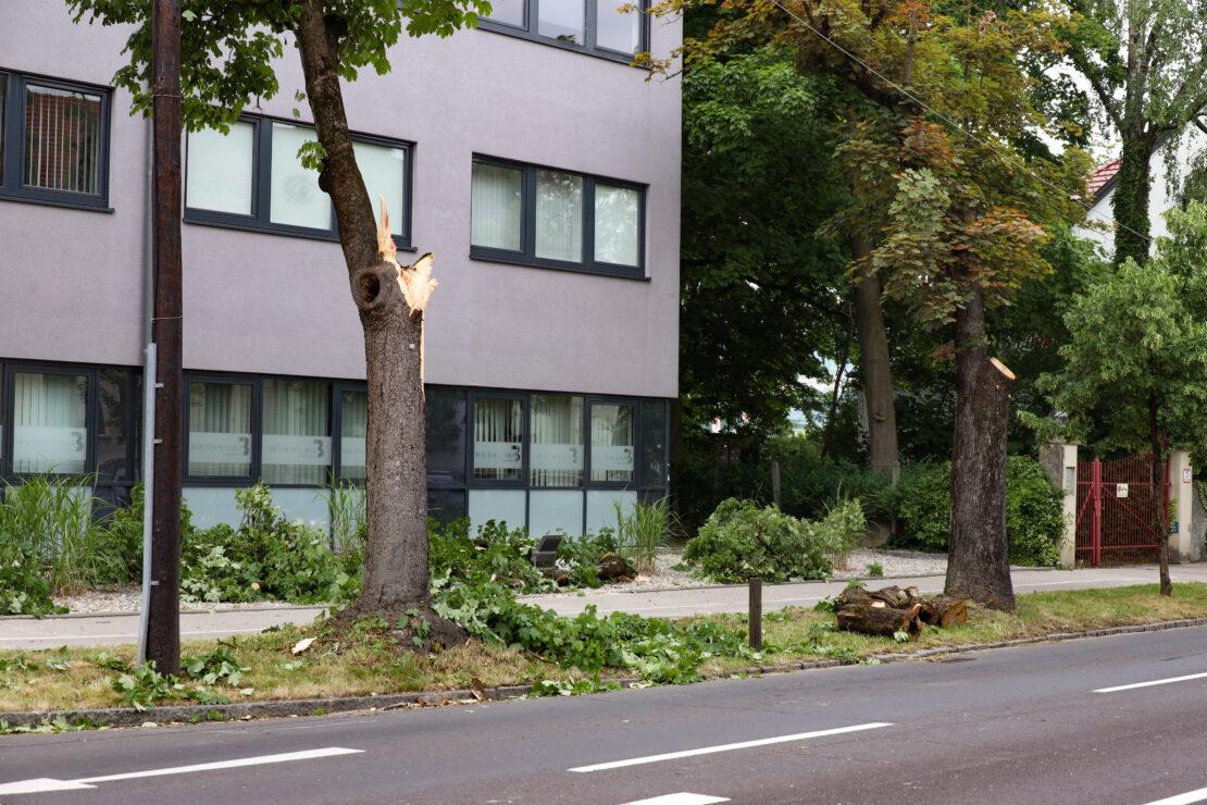 Morscher Ast in Wels-Innenstadt auf LKW gestürzt