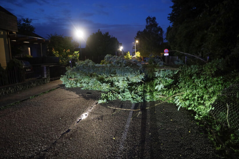 Baum in Wels-Neustadt auf Straße gestürzt - Feuerwehr im Einsatz