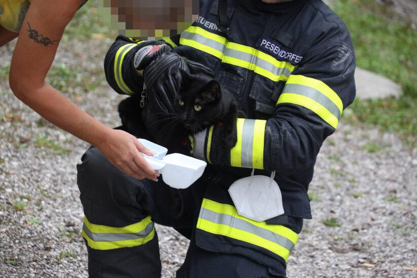 Verletzte Katze in Wels-Innenstadt durch Feuerwehr aus gekipptem Fenster befreit