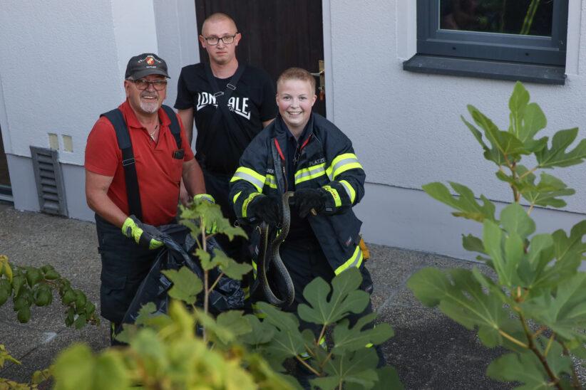 Äskulapnatter durch Einsatzkräfte der Feuerwehr aus Garten in Sattledt gerettet